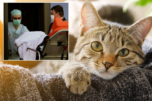 A Cat Tested Positive For Coronavirus In Belgium, Becomes First Feline To Be Infected