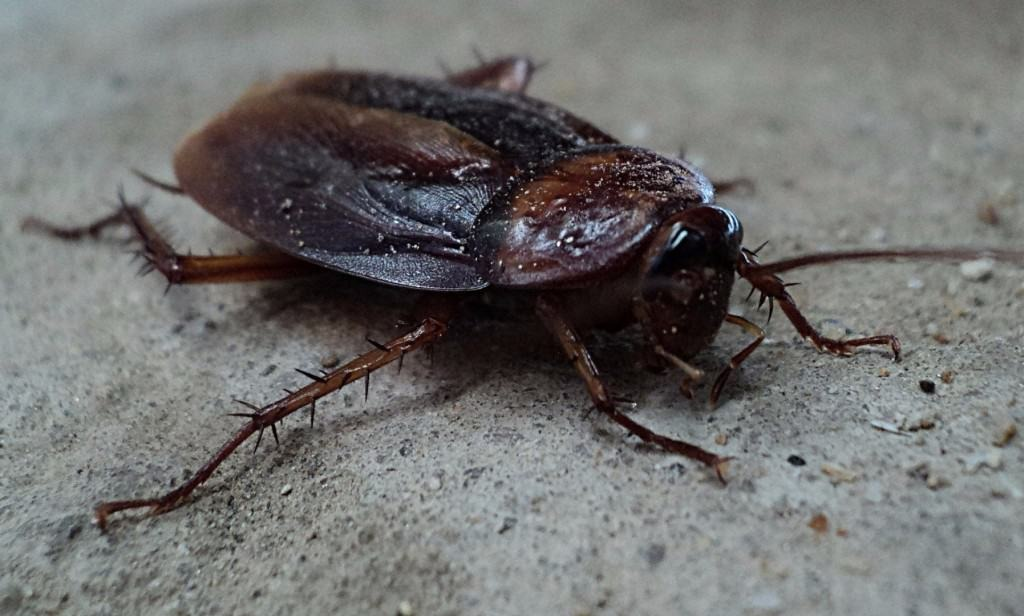Cockroaches abilities