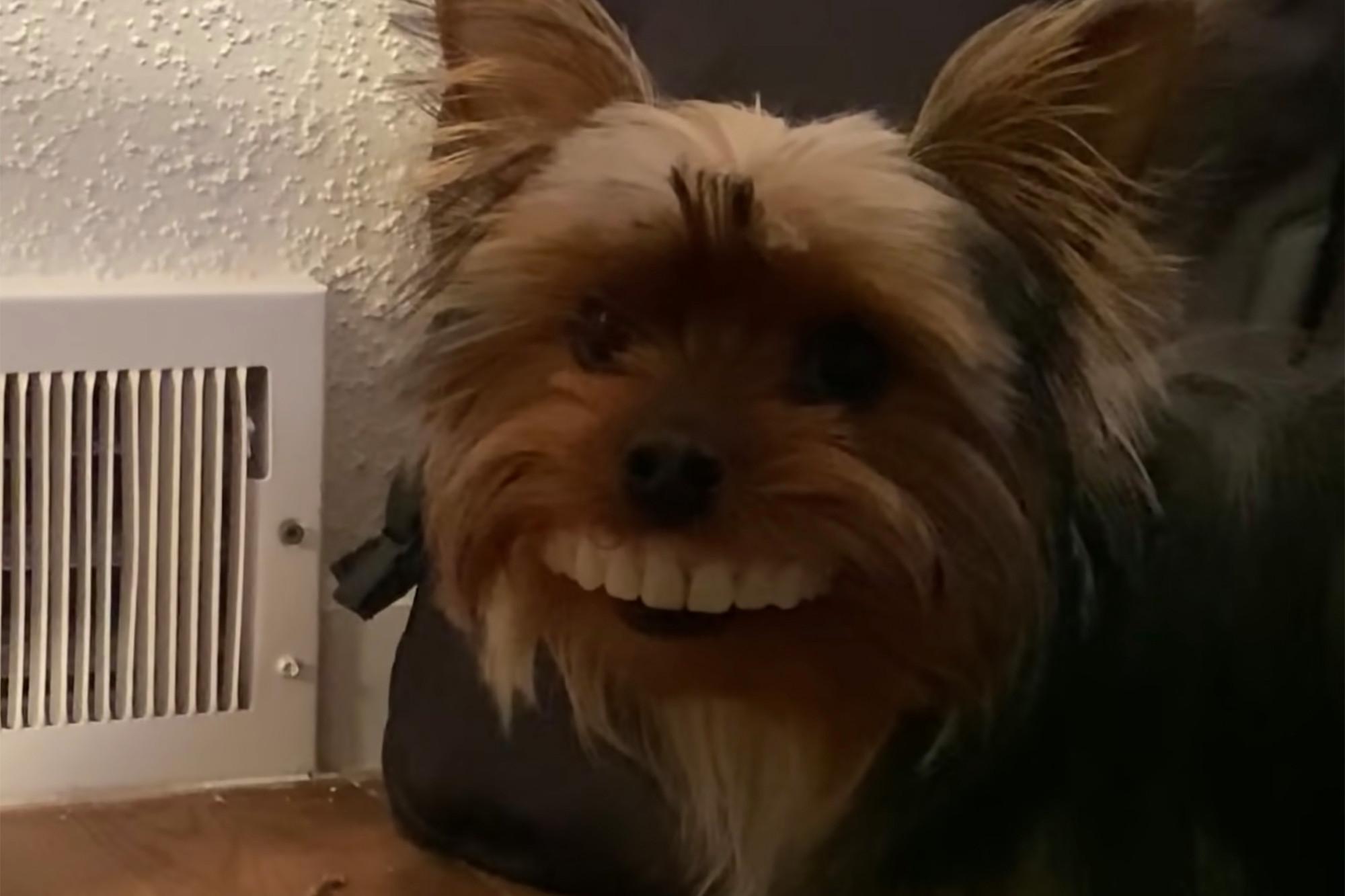 Dog steals man teeths