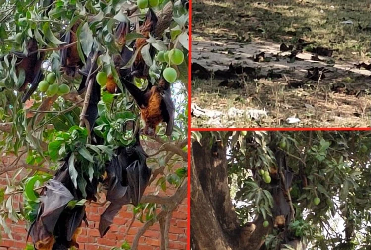 Shocking Post-mortem Reports Of Recent 300 Bats Death Case In India