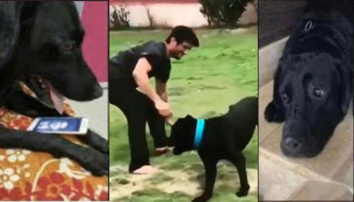 Sushant singh rajput dog fudge
