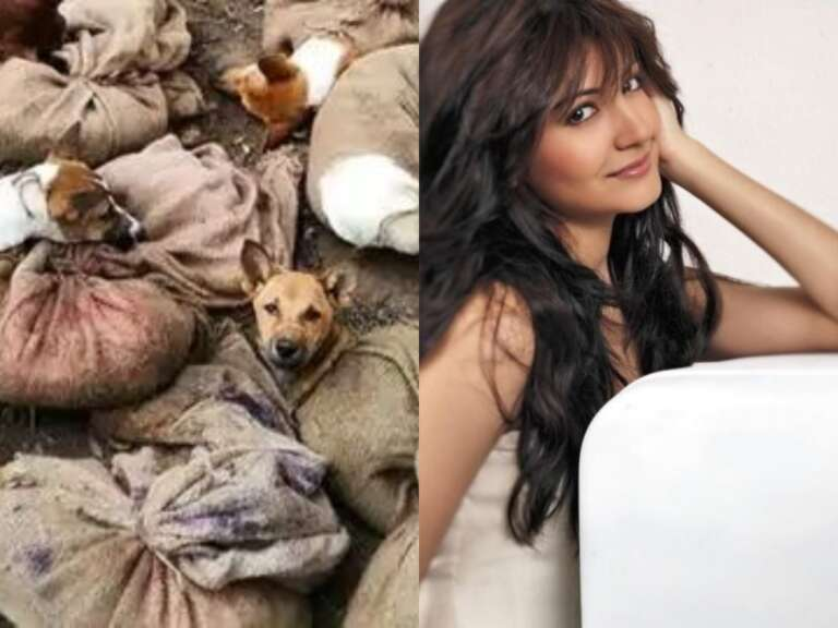 Nagaland Bans Dog Meat: Here's How Celebs Reacted To It