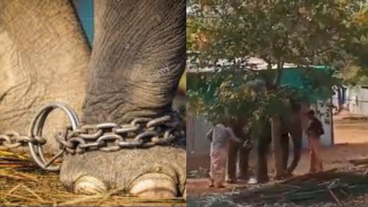 Elephant beaten mercilessly in Tamil Nadu