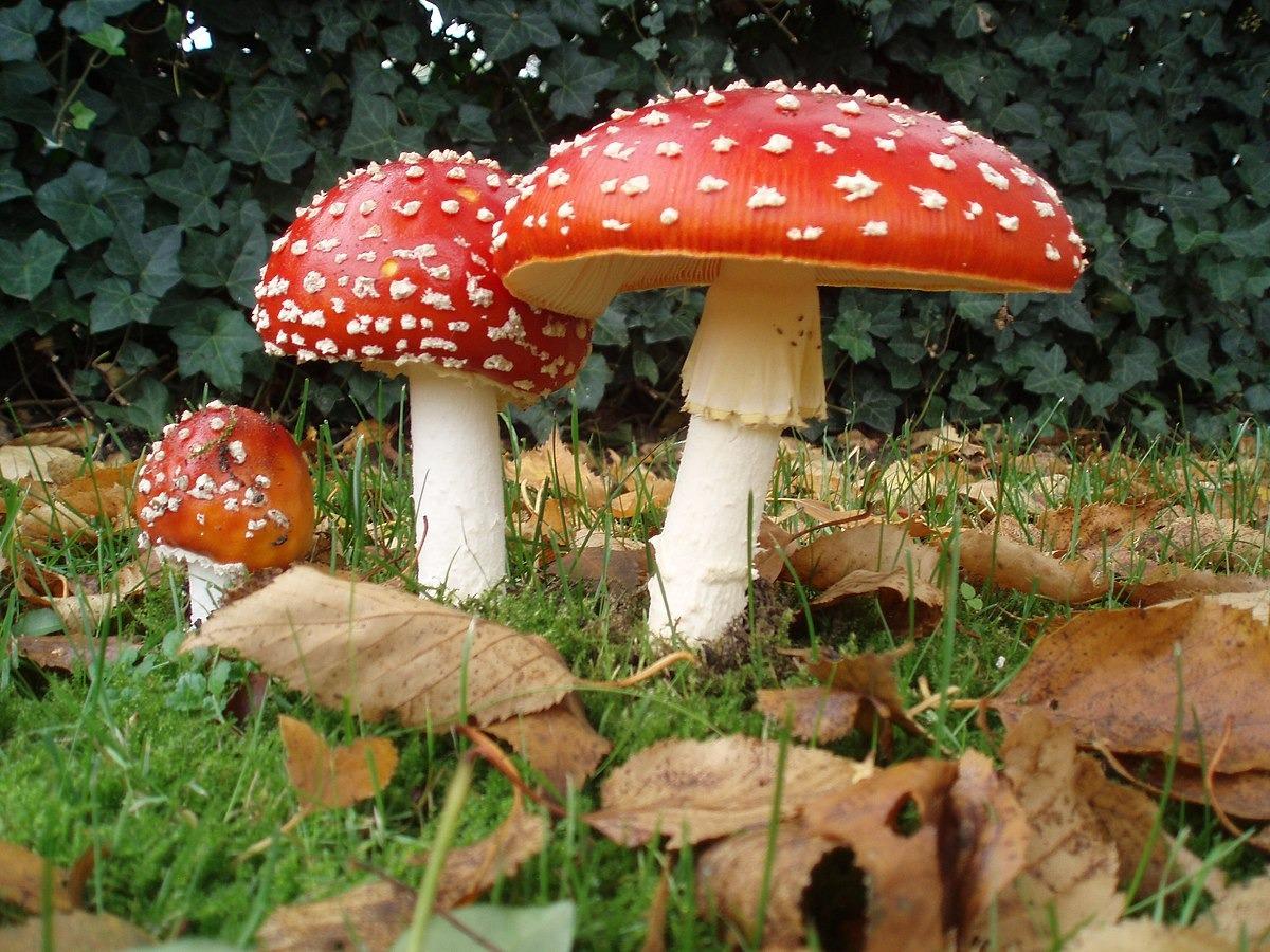 poisness mashrooms