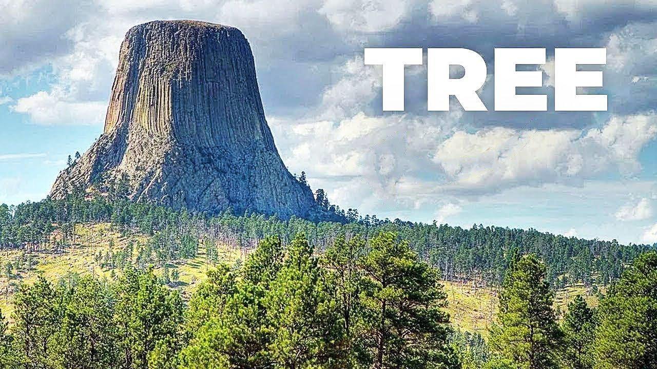 World's Largest Tree