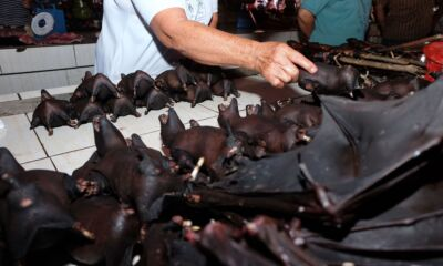 China selling bats in market again