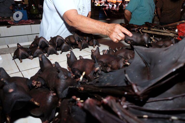 China Celebrating 'Victory' Over Coronavirus, Selling Bats Again In Market