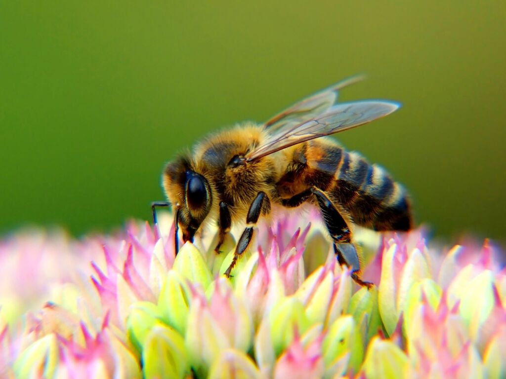 Bees superpowers