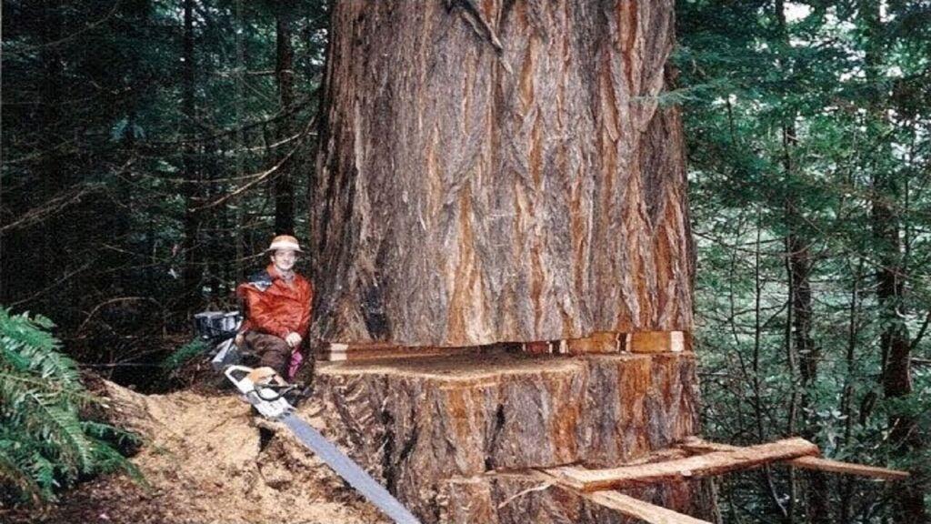 Logging job
