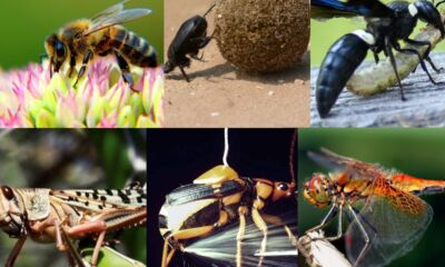 insects with superpowers